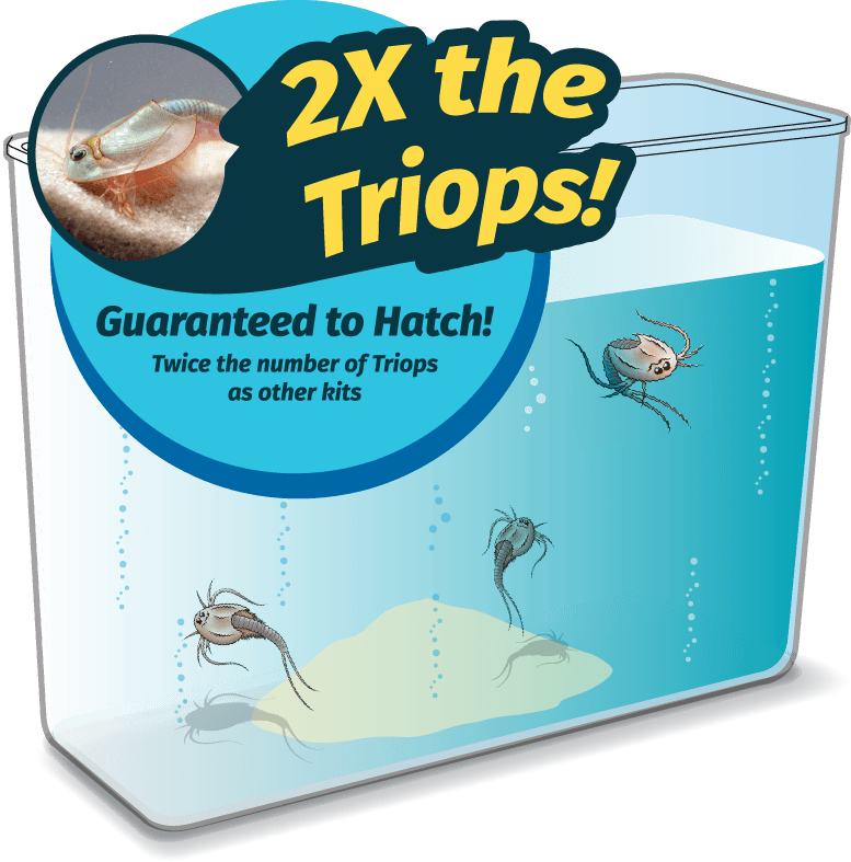 Triops vs. Seamonkeys
